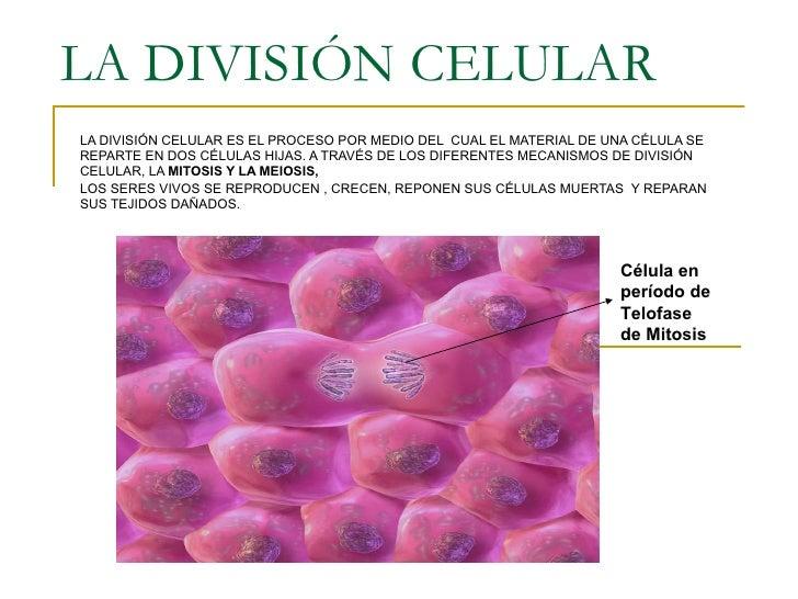 La división celular
