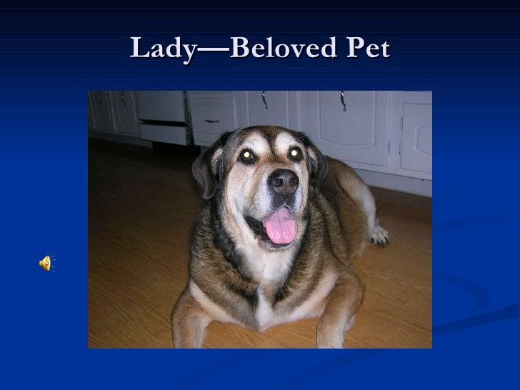 Lady—Beloved Pet