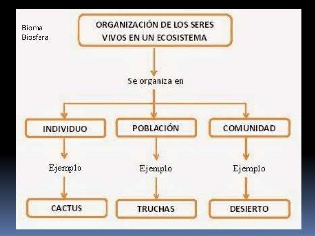 Organizacion de los seres vivos en un ecosistema for Organizacion de un vivero