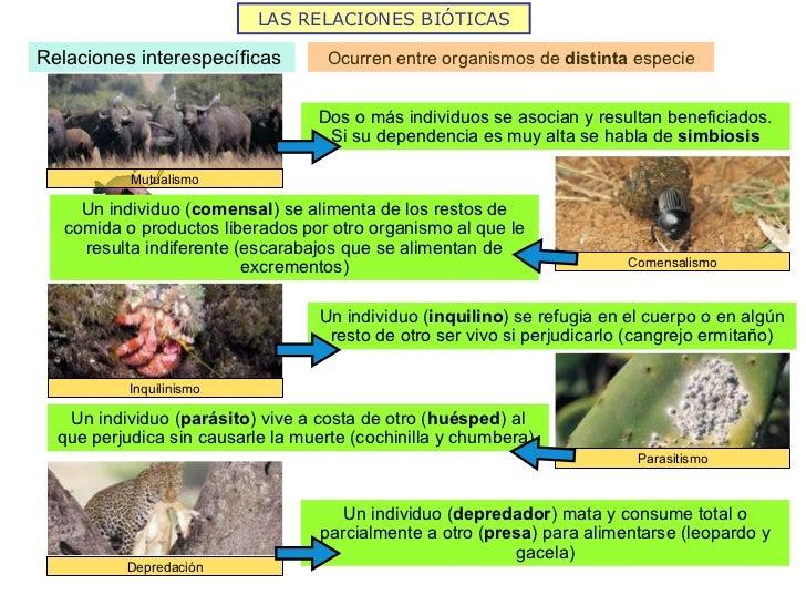 2Ecologa Alberto De Los Mozos  Lessons  Tes Teach