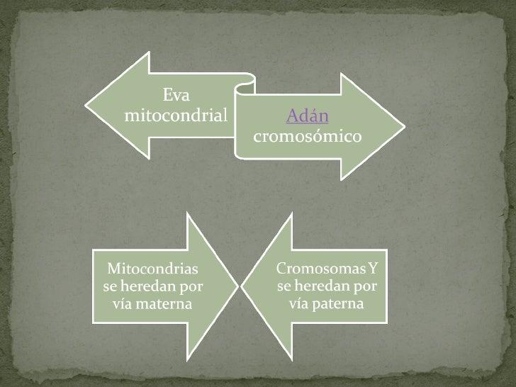 La eva mitocondrial subir