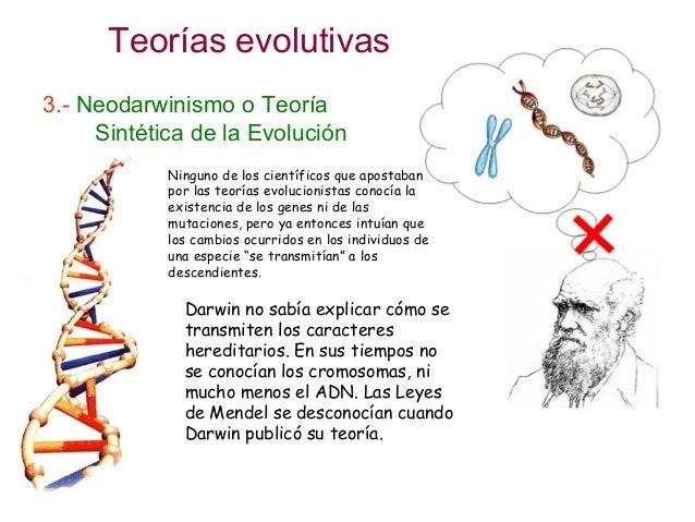Teoria Sintetica Evolucion de la Jirafa o Teoría Sintética de la