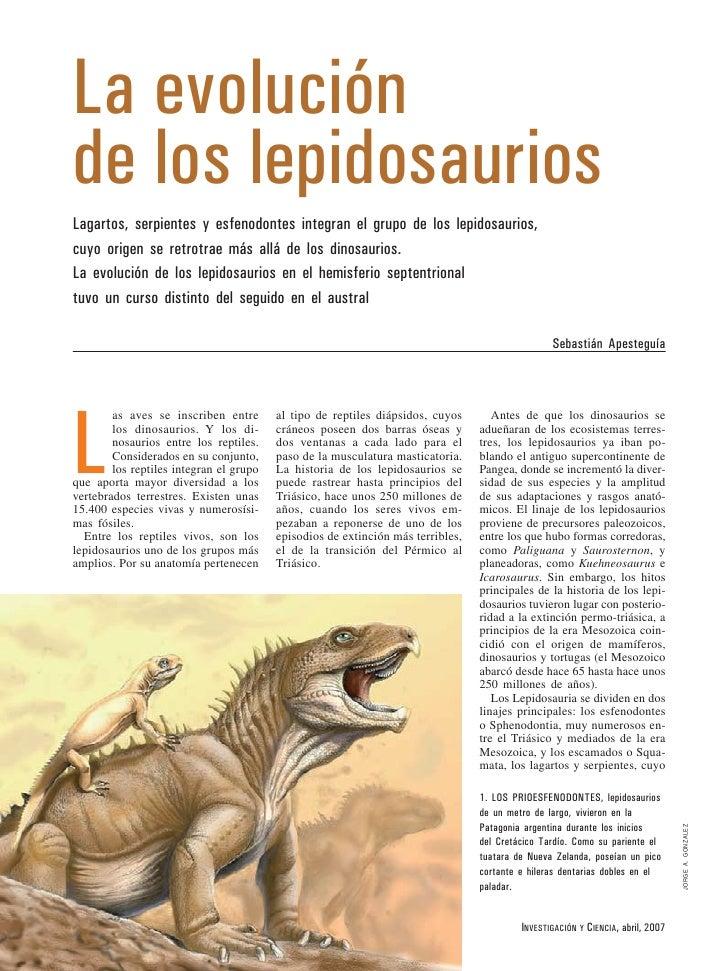 La evolución de los lepidosaurios Lagartos, serpientes y esfenodontes integran el grupo de los lepidosaurios, cuyo origen ...