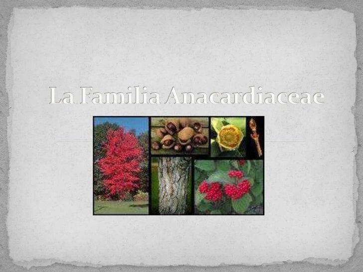 La Familia Anacardiaceae<br />