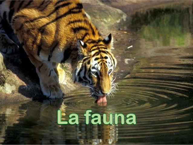 Aquí veremos - ¿ que es la fauna ? - Algunos tipos de fauna - Fauna salvaje o silvestre - Fauna abisal - Fauna de domestic...