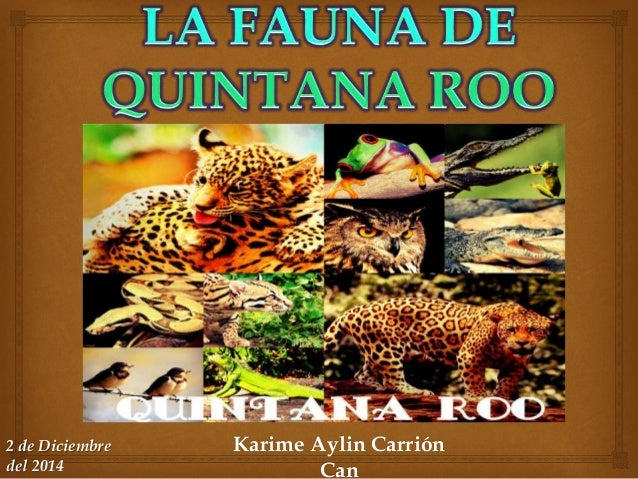 Karime Aylin Carrión  Can  2 de Diciembre  del 2014
