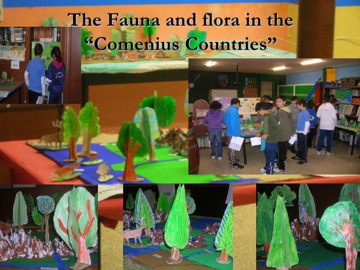 """The Fauna and flora in the """"Comenius Countries"""""""