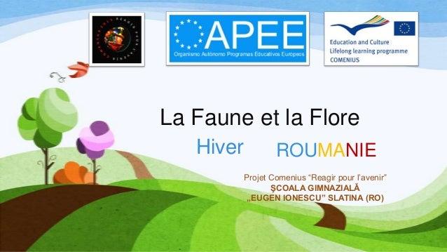"""La Faune et la Flore Hiver  ROUMANIE Projet Comenius """"Reagir pour l'avenir"""" ŞCOALA GIMNAZIALǍ """"EUGEN IONESCU"""" SLATINA (RO)"""