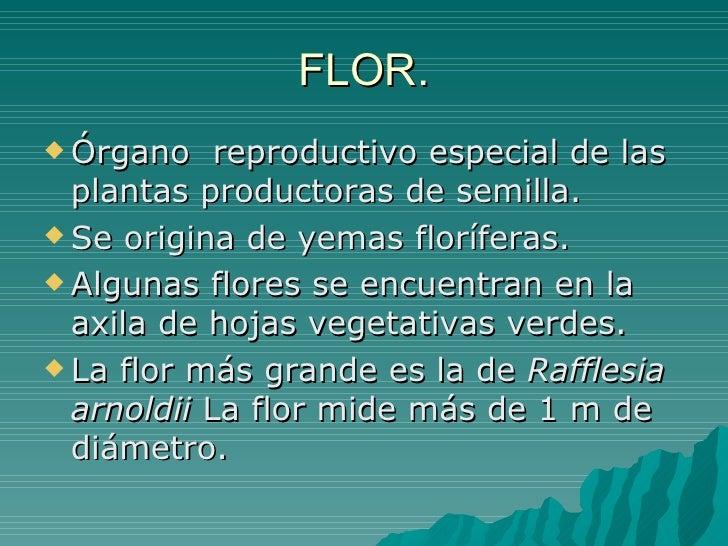 FLOR. <ul><li>Órgano  reproductivo especial de las plantas productoras de semilla. </li></ul><ul><li>Se origina de yemas f...