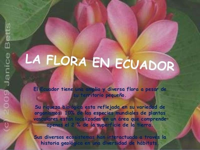 El Ecuador tiene una amplia y diversa flora a pesar de                su territorio pequeño. Su riqueza biológica esta ref...