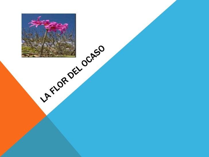 EL DESIERTO DE ATACAMAEl desierto de Atacama es el desierto donde reside nuestra flor del ocaso.Este desierto es el desier...