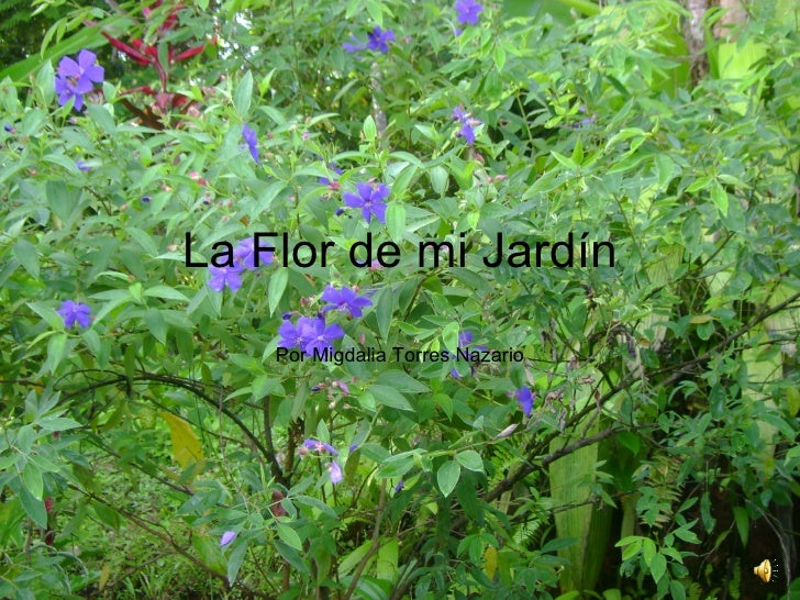 La flor de mi jardín
