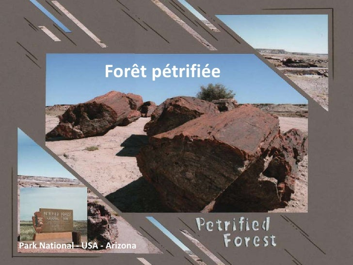 Forêt pétrifiéePark National - USA - Arizona