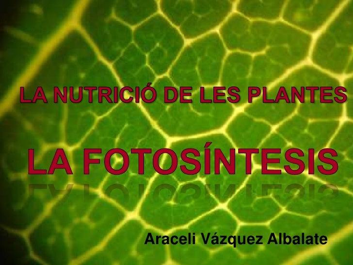 LA NUTRICIÓ DE LES PLANTES<br />LA FOTOSÍNTESIS<br />Araceli Vázquez Albalate<br />