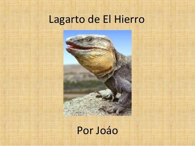Lagarto de El Hierro     Por Joáo