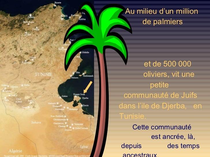 Au milieu d'un million  de palmiers  et de 500 000  oliviers, vit une  petite  communauté de Juifs dans l'ile de Djerba,  ...