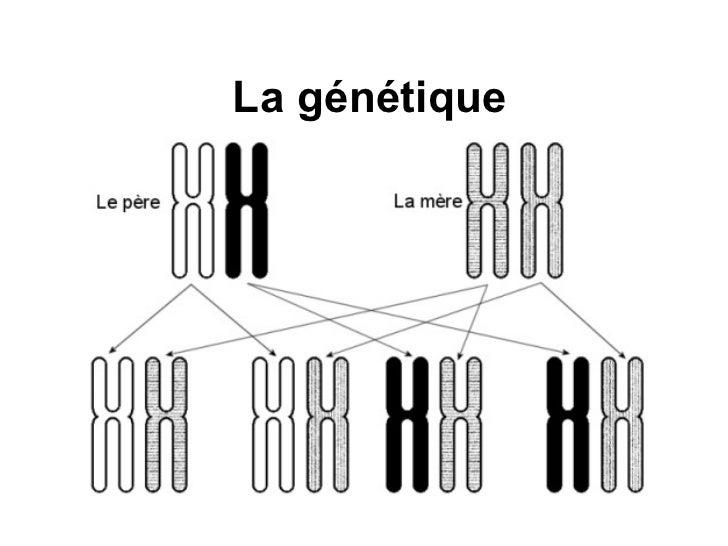 La génétique