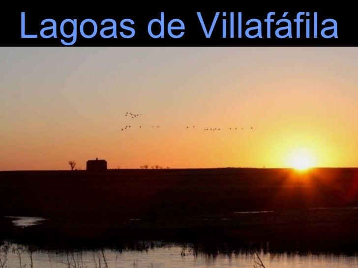 Lagoas de Villafáfila