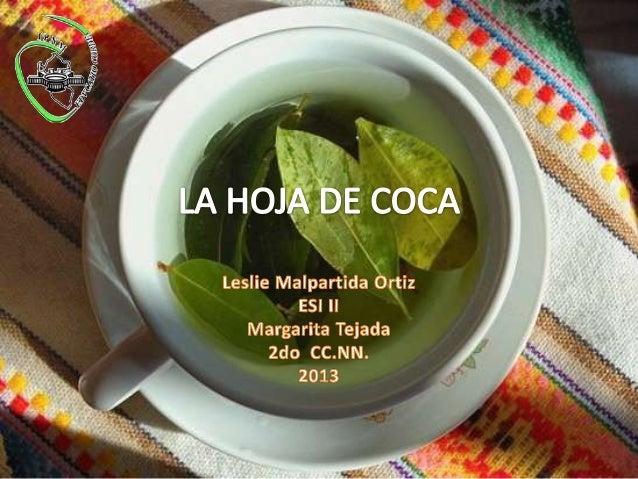 HOJA DE COCA •  •  NOMBRE COMÚN: COCA, TUPA COCA, MAMOX COCA (Rowstworowsky, 1988) NOMBRE CIENTÍFICO: Erythroxylum coca Po...
