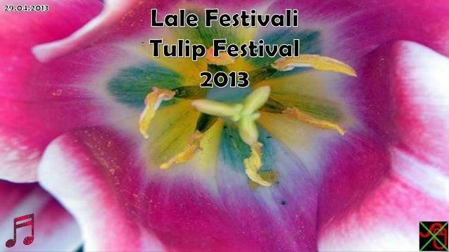 Lale festivali,tulip festival 2013