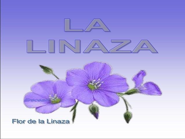En los últimos años se ha publicadouna gran cantidad de informaciónacerca de los efectos curativos de lasemilla de linaza ...