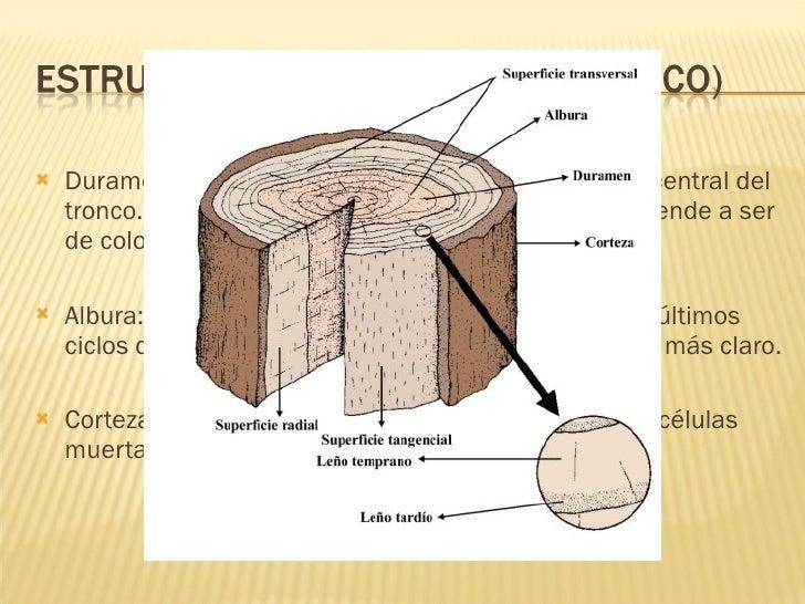 La madera el cart n y el papel for La beta de la madera