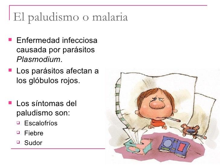 Los helmintos de 3 4 grupos patogennosti