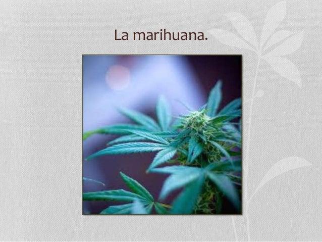 La marihuana.