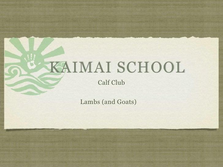 KAIMAI SCHOOL        Calf Club    Lambs (and Goats)