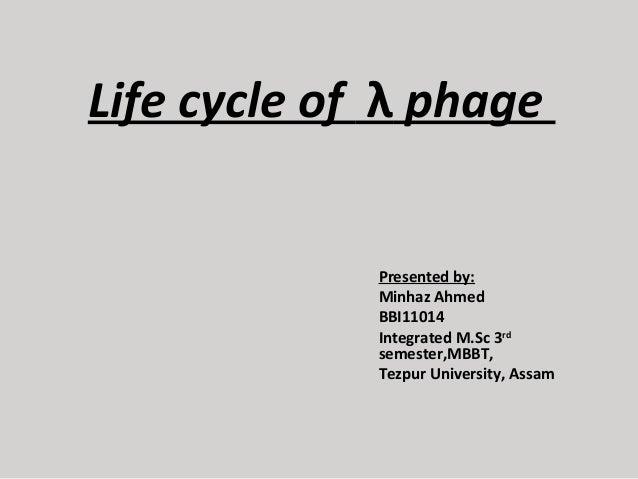 Life cycle of λphage  Presentedby: MinhazAhmed BBI11014 IntegratedM.Sc3rd semester,MBBT, TezpurUniversity,Assam