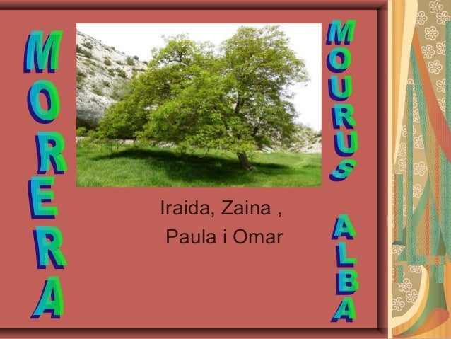 Iraida, Zaina , Paula i Omar