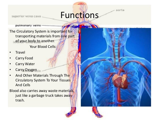 Role of energy in the cardiovascular system. Essay Writing Service ...