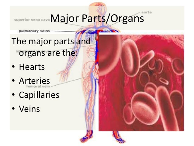 Human body 2.0: Cardiovascular post