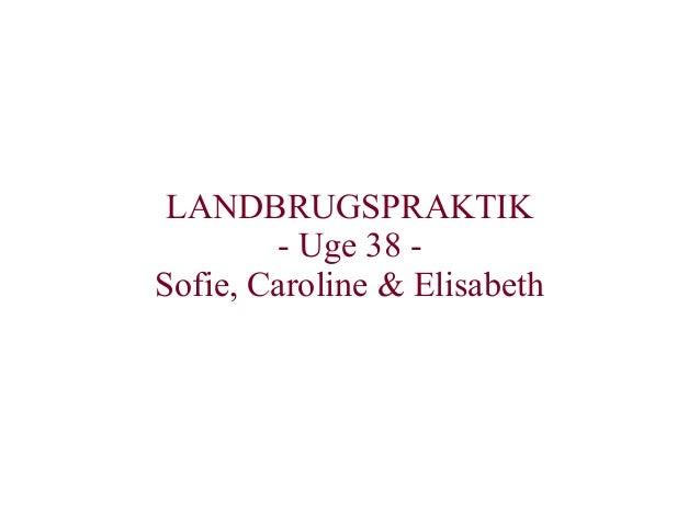 LANDBRUGSPRAKTIK - Uge 38 - Sofie, Caroline & Elisabeth