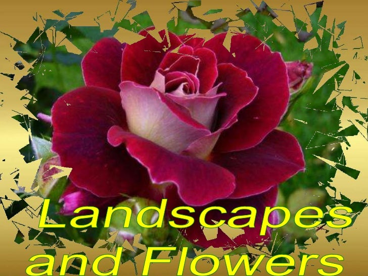 Landscapes and flowers