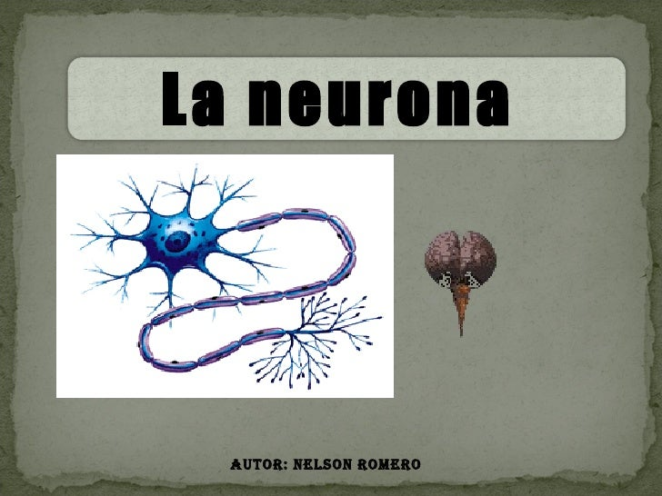 Autor: Nelson Romero La neurona