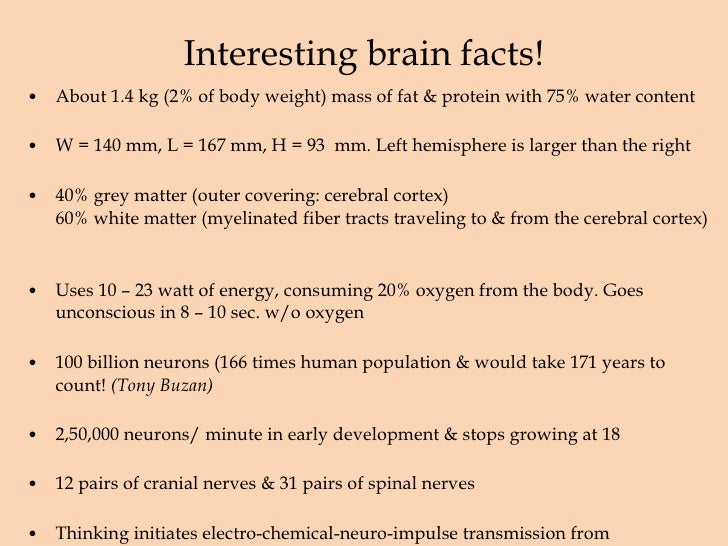 Amazing Facts About Writing and the Brain (Infograph)