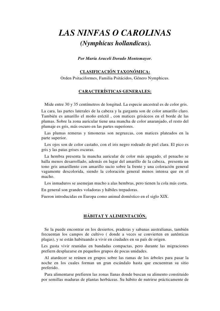 LAS NINFAS O CAROLINAS                       (Nymphicus hollandicus).                       Por María Araceli Dorado Monte...