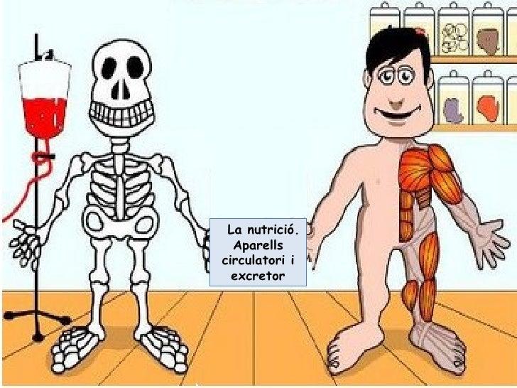 La nutrició. Aparells circulatori i excretor