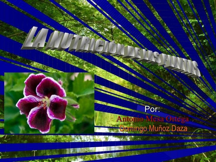 Por:   Antonio Mesa Ortega  Domingo Muñoz Daza LA NUTRICIÓN DE LAS PLANTAS