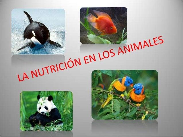 Las funciones de los seres vivos • Nutrición- para su mantenimiento, los organismos necesitan incorporar materia y energía...