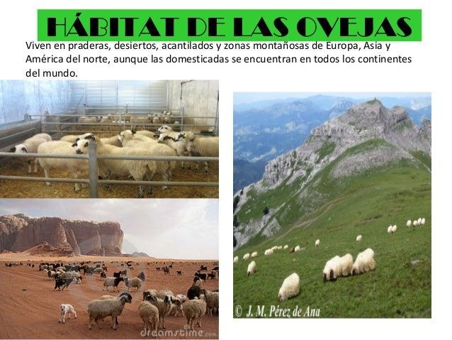 La oveja for Habitat de la vienne chatellerault