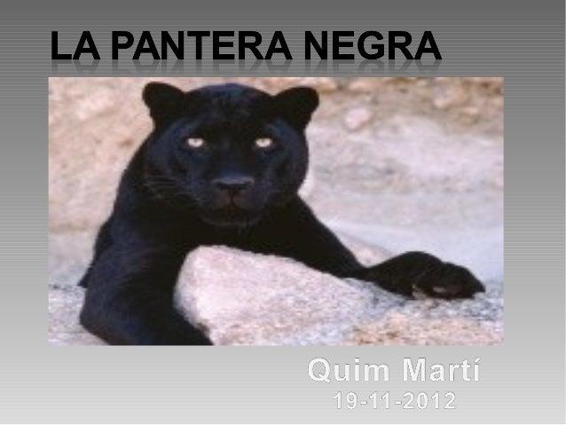 Què és la pantera?     Un animal salvatge i ferotgede la família dels felins, com els gats.
