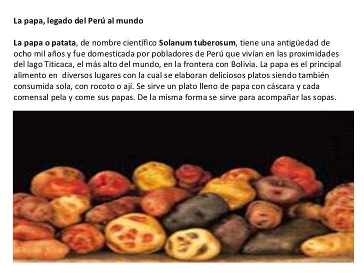 La papa, legado del Perú al mundoLa papa o patata, de nombre científico Solanum tuberosum, tiene una antigüedad deocho mil...
