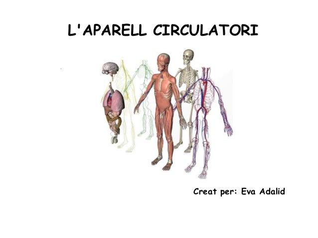 L'APARELL CIRCULATORI Creat per: Eva Adalid