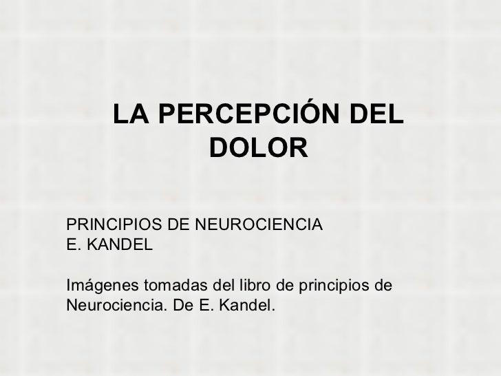 LA PERCEPCIÓN DEL DOLOR PRINCIPIOS DE NEUROCIENCIA E. KANDEL Imágenes tomadas del libro de principios de Neurociencia. De ...