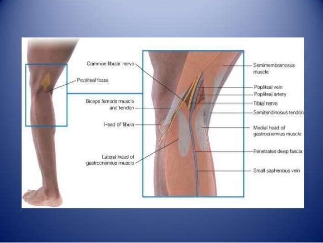 La pierna y el pie
