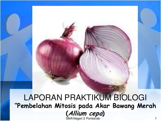 "LAPORAN PRAKTIKUM BIOLOGI""Pembelahan Mitosis pada Akar Bawang Merah               (Allium cepa)               SMA Negeri 2..."