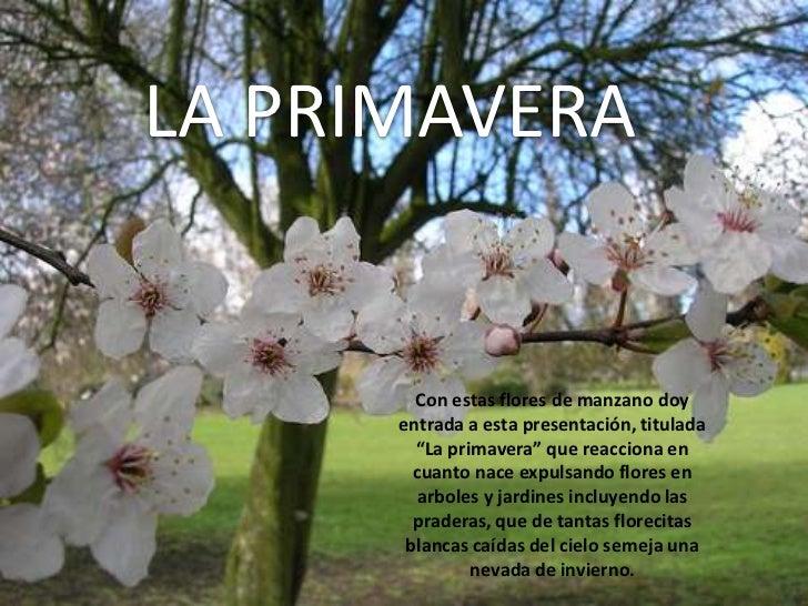 """LA PRIMAVERA<br />Con estas flores de manzano doy entrada a esta presentación, titulada """"La primavera"""" que reacciona en cu..."""