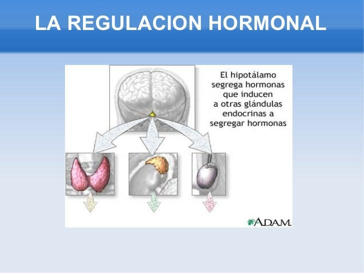 funcion de las hormonas esteroideas